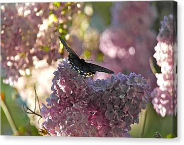 Canvas Print featuring the photograph Lilac World by Michele Myers