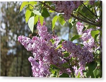 Canvas Print featuring the photograph Lilacs 5545 by Antonio Romero