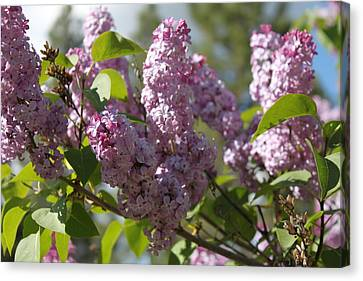 Canvas Print featuring the photograph Lilacs 5548 by Antonio Romero