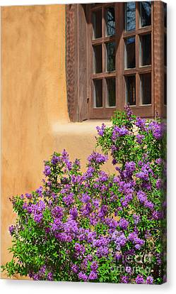 Lilacs And Adobe Canvas Print by Catherine Sherman