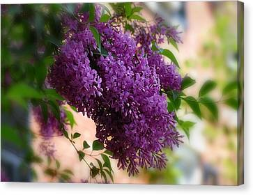 Canvas Print featuring the photograph Lilacs by Elaine Manley