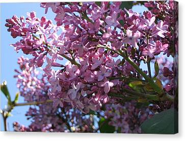 Canvas Print featuring the photograph Lilacs In Bloom 2 by Barbara Yearty