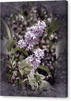 Lilacs In Lace Canvas Print