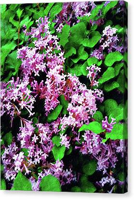Canvas Print featuring the painting Lilacs In May by Sandy MacGowan