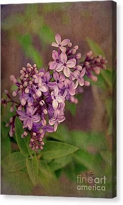 Lilacs Canvas Print by Krista-