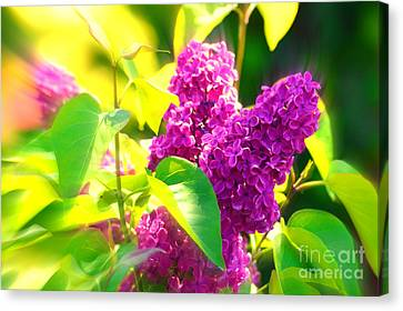 Canvas Print featuring the photograph Lilacs by Susanne Van Hulst