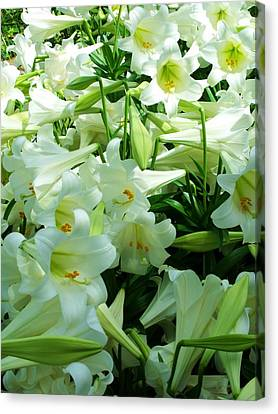 Lilies 11 Canvas Print by Anna Villarreal Garbis