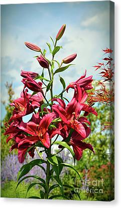 Canvas Print featuring the photograph Lilies In The Garden by Kerri Farley