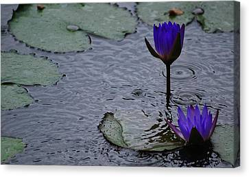 Canvas Print featuring the photograph Lilies In The Rain by Amee Cave