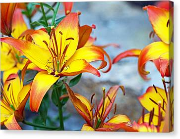 Lilies Of The Field #1 Canvas Print