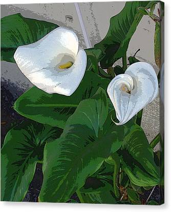 Lilies Of The Field Canvas Print by Sally Stevens
