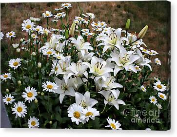 Lilies With Daisies Canvas Print