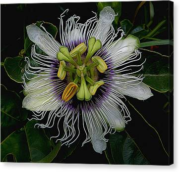 Lilikoi Passion Fruit Canvas Print by Pamela Walton