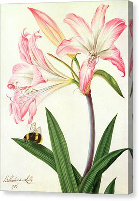 Lilium Belladonna And Bee Canvas Print