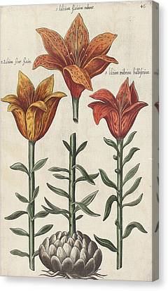 Lillies Canvas Print by Emanuel Sweert