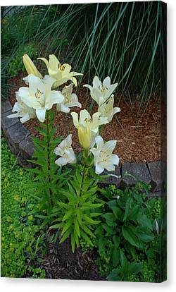 Canvas Print featuring the photograph Lillies by Ferrel Cordle