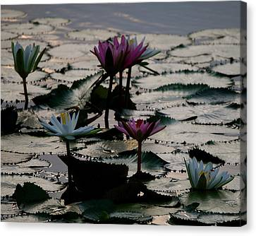 Lillies On The Lake Canvas Print by Kimberly Camacho