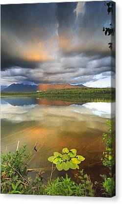 Water Lillies Canvas Print - Lilly by Ed Boudreau