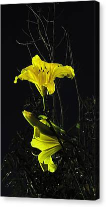 Lilly In The Evening Canvas Print by Charles Ables