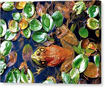 Lilly Pond Frog Canvas Print