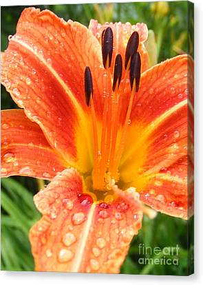 Canvas Print featuring the photograph Lily After The Rain by Lila Fisher-Wenzel