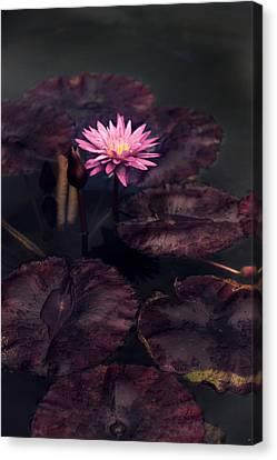 Moonlight Lily Canvas Print by Jessica Jenney