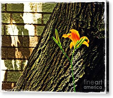 Day Lilly Canvas Print - Lily And Shadow by Sarah Loft