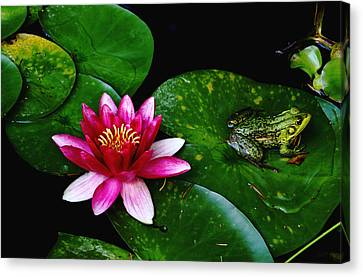 Lily And The Frog Canvas Print by Debbie Oppermann