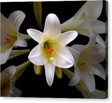 Lily Canvas Print by Ben and Raisa Gertsberg