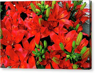 Canvas Print featuring the photograph Lily Blossoms by LeeAnn McLaneGoetz McLaneGoetzStudioLLCcom