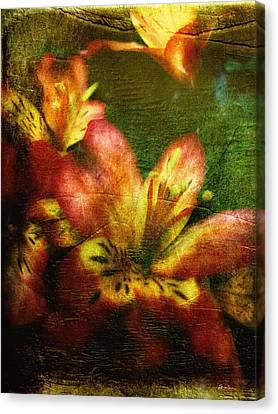 Lily Dreams Canvas Print