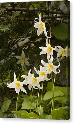 Canvas Print featuring the photograph Lily Fantasy by Judy Deist