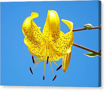 Lily Flower Art Print Blue Sky Yellow Lilies Baslee Troutman Canvas Print by Baslee Troutman