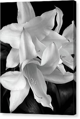 Lily Flowers Black And White Canvas Print by Jennie Marie Schell