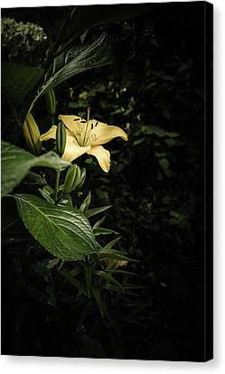 Canvas Print featuring the photograph Lily In The Garden Of Shadows by Marco Oliveira