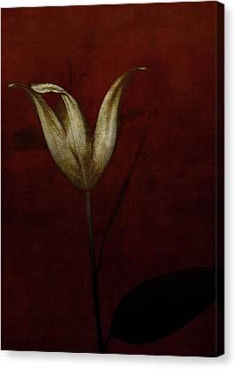Crimson Lilies Canvas Print - Lily by Johan Lilja