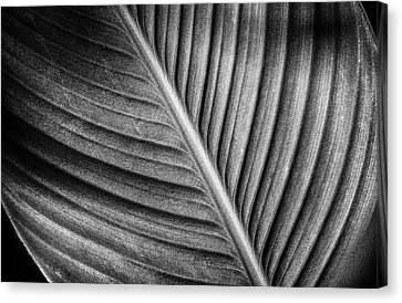 Lily Leaf Lines Canvas Print