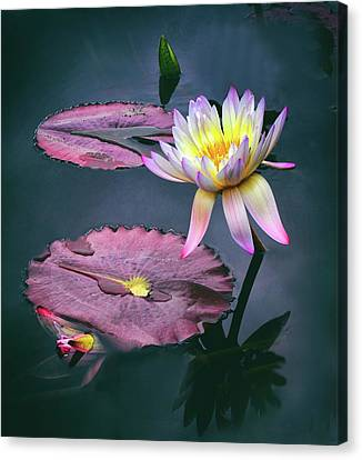 Lily Light Canvas Print