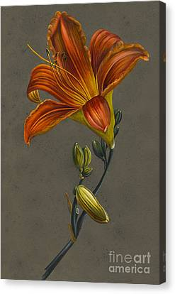 In Bloom Canvas Print - Lily by Louise D'Orleans