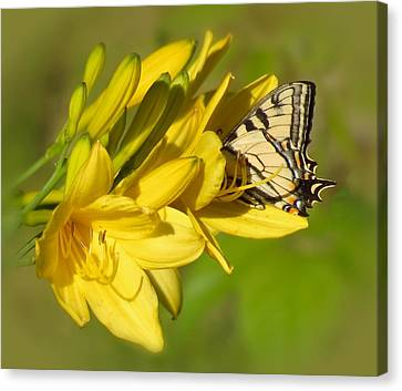 Lily Lover Canvas Print