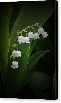 Lily Of The Valley 2 Canvas Print