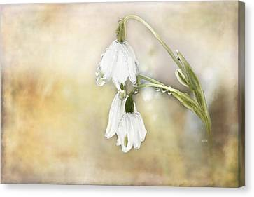 Lily Of The Valley Canvas Print by Angela A Stanton