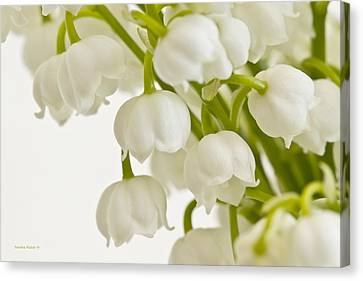 Country Magazine Decor Canvas Print - Lily Of The Valley by Sandra Foster