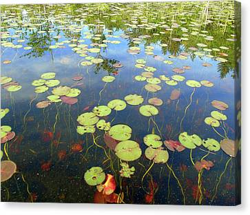 Lily Pads And Reflections Canvas Print