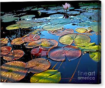 Lily Pads At Sunset Canvas Print by Kaye Menner