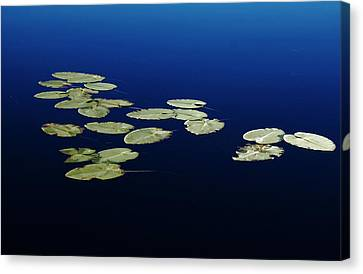 Canvas Print featuring the photograph Lily Pads Floating On River by Debbie Oppermann