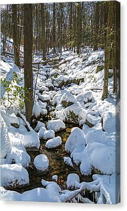 Lily Pads Of Snow Canvas Print