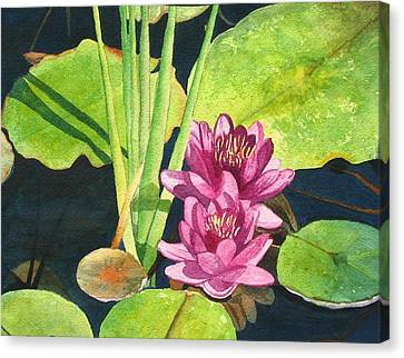 Lily Pads Canvas Print by Sharon Farber