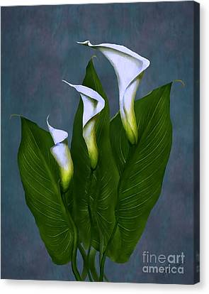 Canvas Print featuring the painting White Calla Lilies by Peter Piatt