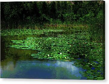 Canvas Print featuring the photograph Lily Pond by Elaine Manley